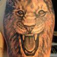 Ett aggressivt lejon i närbild