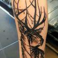 A sketched deer with black lines